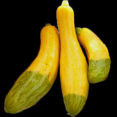 squash yellow zephyr mountain harvest organics